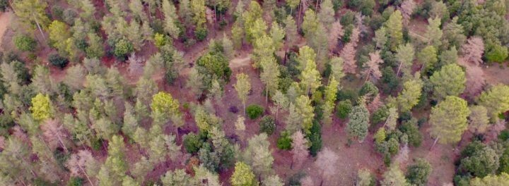 How are we assessing the future of Mediterranean forests? New publication by members of the ESP Mediterranean working group