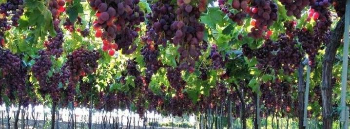 Postdoc: ES in vineyards