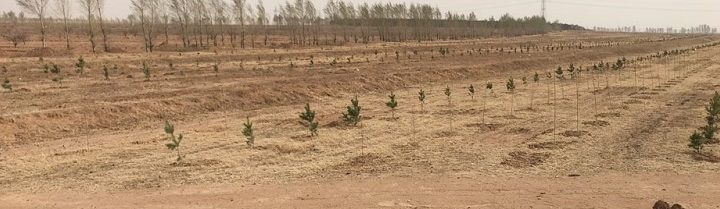 Common Challenges of Desertification in Northeast Asia