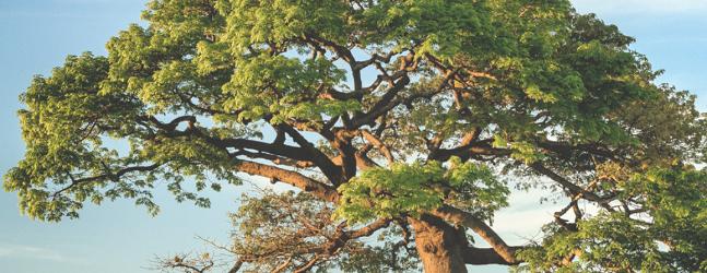 ReNature Interdisciplinary Summer School – Nature Based Solutions in Landscape Management