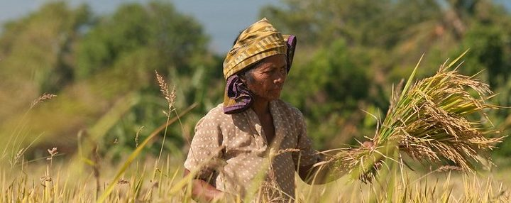 GLF Bonn: Food systems in focus at a time of crisis