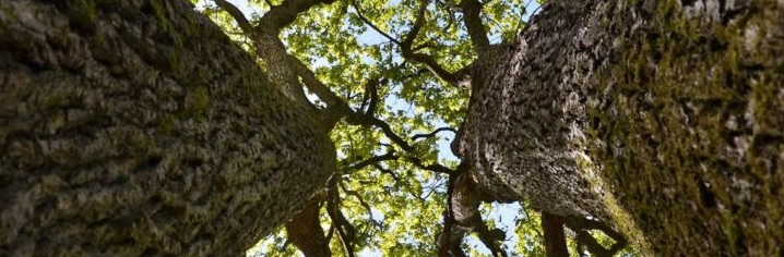 Ecosystem services assessment in oak forests