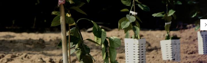 Menaqua Webinars: Tree planitng in the Middle East
