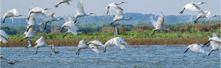 Stork or birds of prey? Assessing the baseline indicators of the LIFE Danube Free Sky project